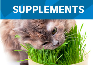 Supplements-Cats
