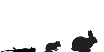 Banner-Small-Animals