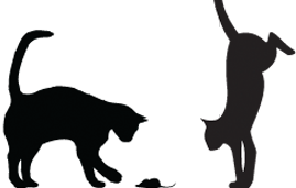 Banner-Cats